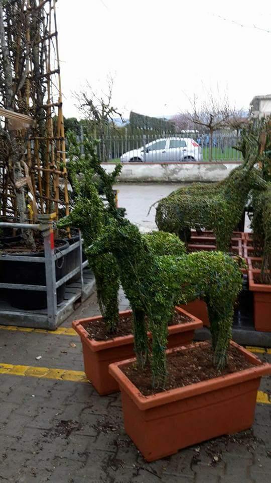 Topiary                                        5/5(2)